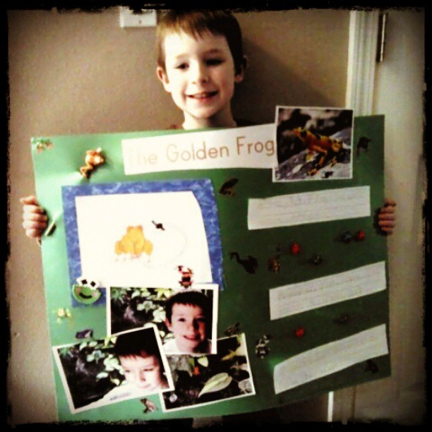 Zane's Frog Project