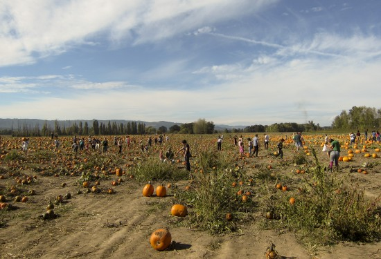 pumpkinpatch_3