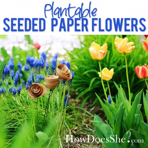 so-cool-Plantable-Seeded-Flowers