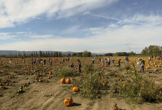 pumpkinpatch_3